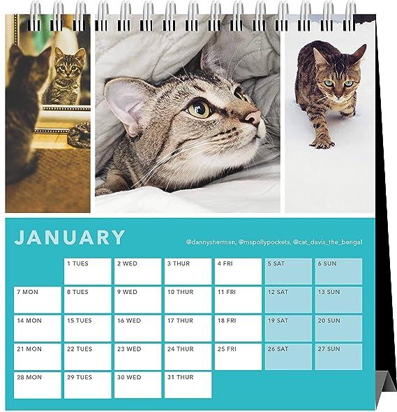 Cats On Instagram - Calendario de escritorio 2019: Amazon.es: Oficina y papelería