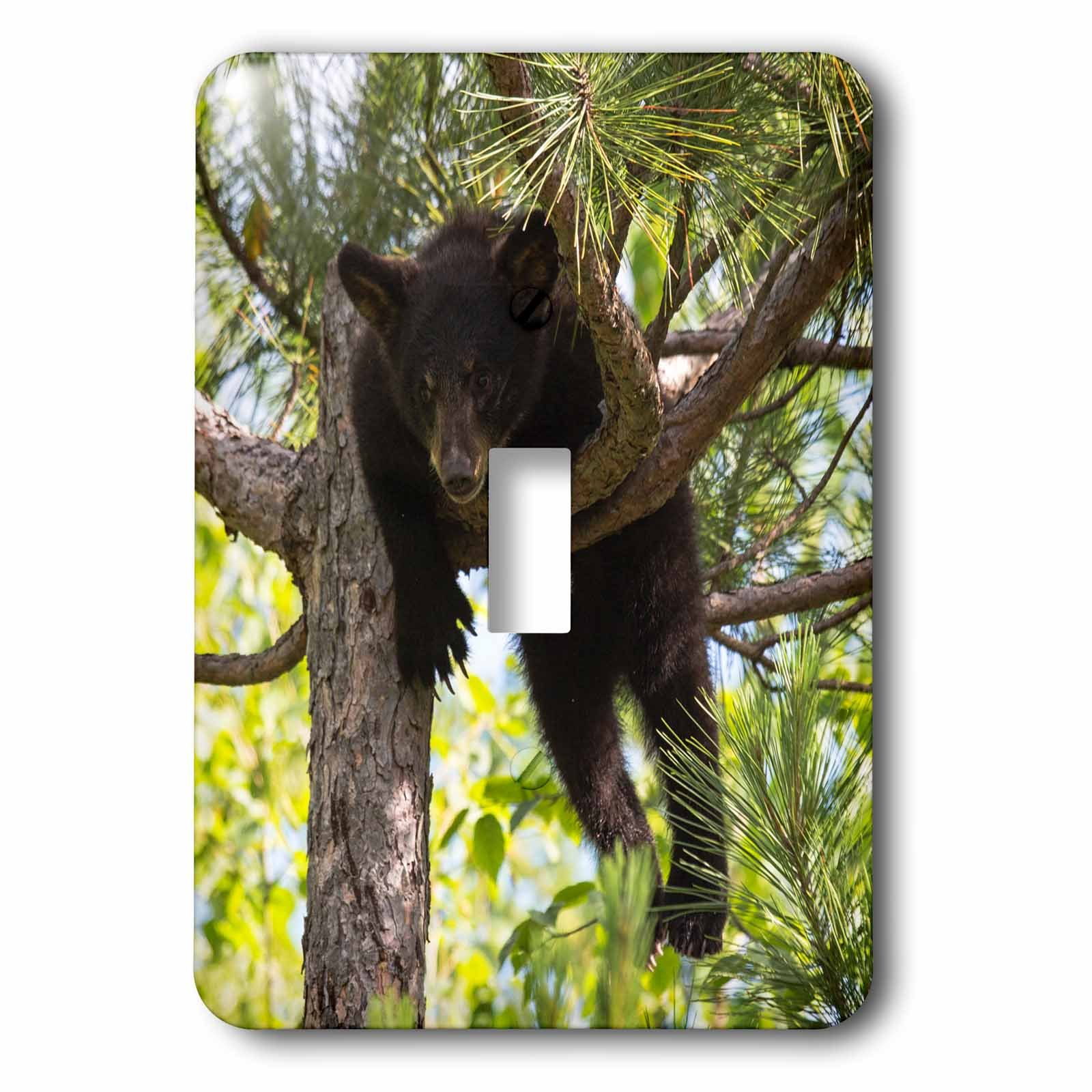 3dRose Danita Delimont - Baby animals - USA, Minnesota, Sandstone, Black Bear Cub Stuck in a Tree - Light Switch Covers - single toggle switch (lsp_279128_1)