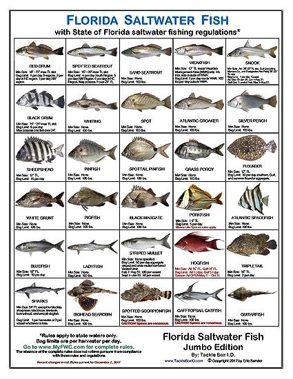 Amazon com florida fish identification card jumbo edition