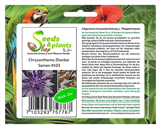 25 semillas de flores de crisantemo Zhankai planta rara semilla #103: Amazon.es: Jardín