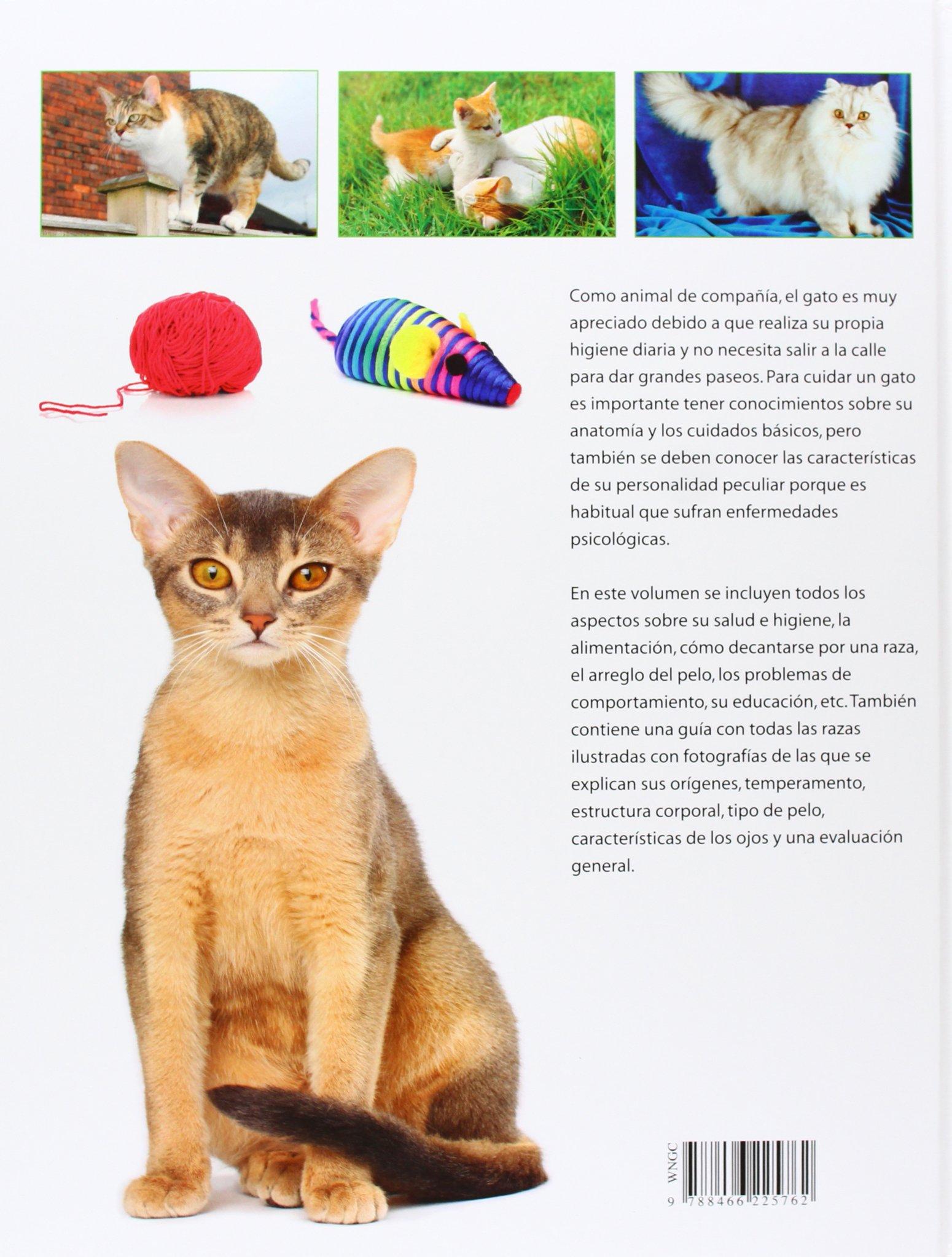 Guía práctica del gato / Cat Practical Guide (Spanish Edition): Claire Bessant, Blanca del Cerro: 9788466225762: Amazon.com: Books