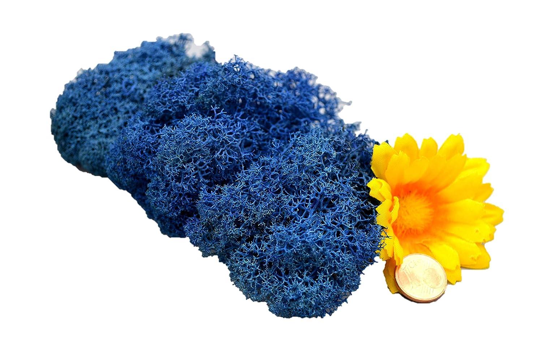 Muwse Islandmoos 1AV 25g Blau vorgereinigt präpariert gefärbt weich haltbar