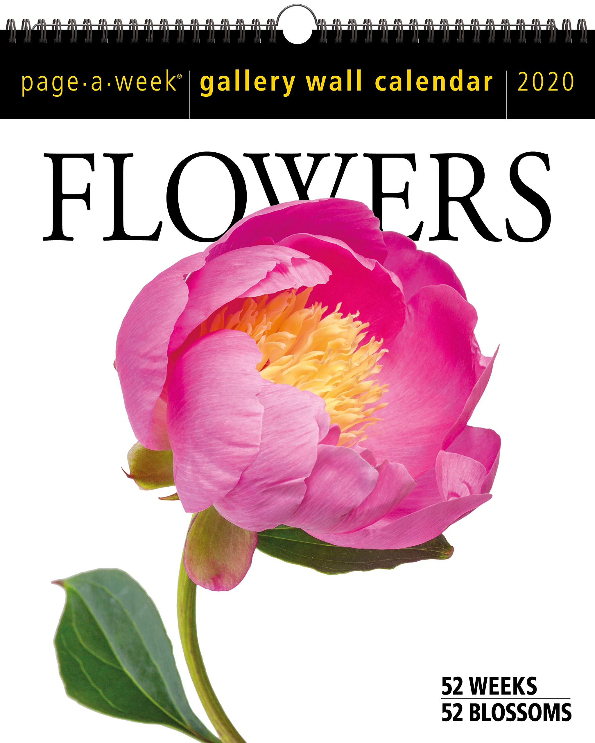 Blossoms 2019 Calendar 16 Month Wall Hanging 12 X 11 Inch Floral Garden Nature
