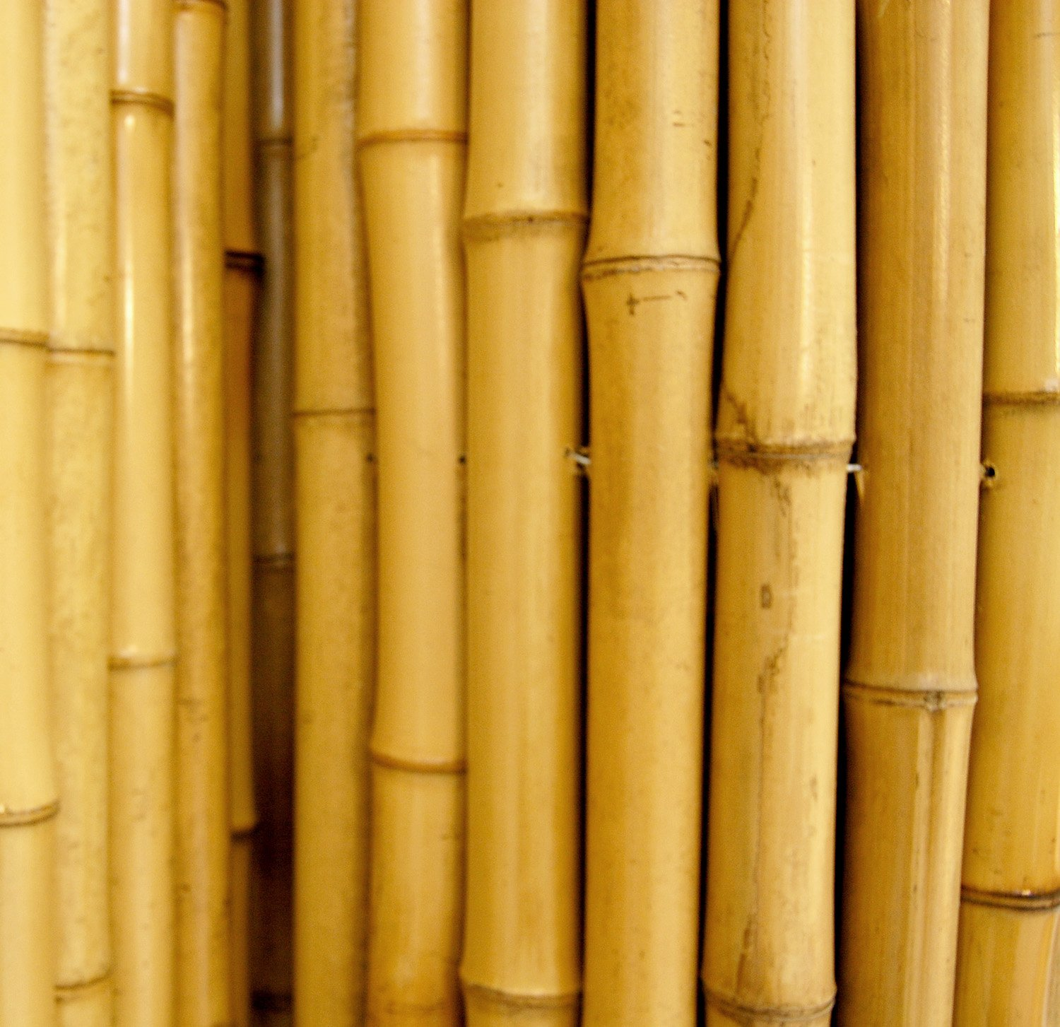 "Amazon Natural Rolled Bamboo Fencing 3 4"" D x 3 H x 8 L"