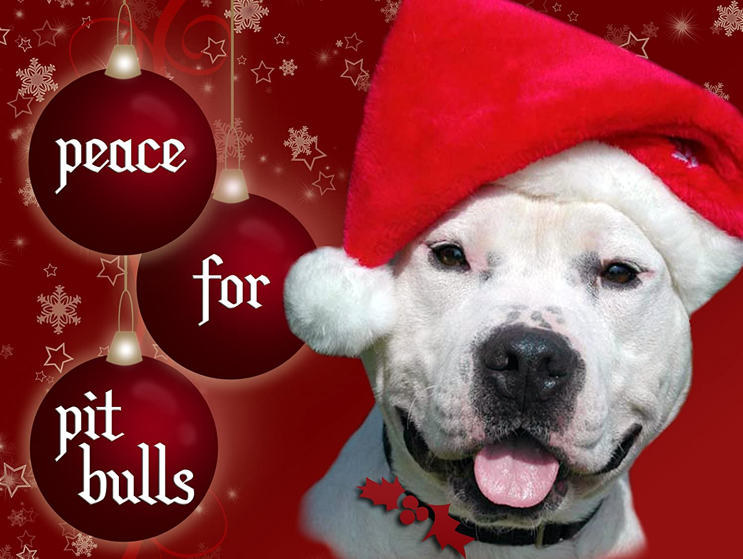 Amazon.com : Peace For Pit Bulls Christmas Cards (Pack of 10 ...
