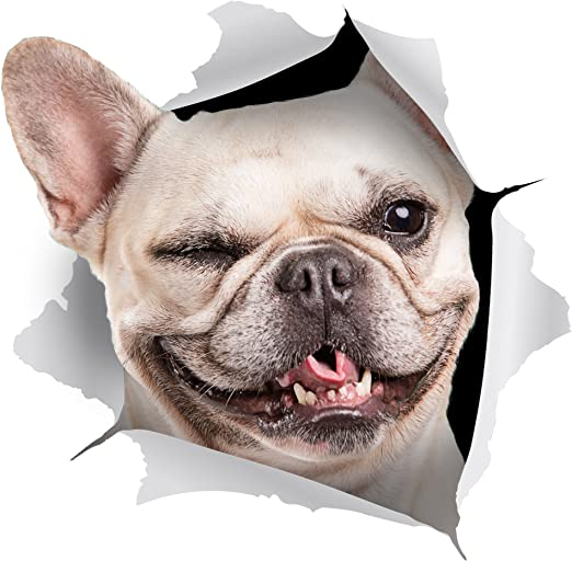 Winston & Bear 2 pack - adhesivos 3D perro - guiño francés Bulldog ...