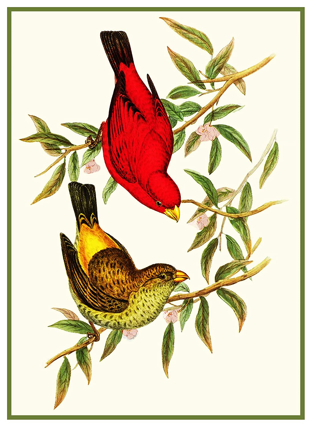 Orenco Originals Scarlet Finches by Naturalist Gould Birds Counted Cross Stitch Pattern