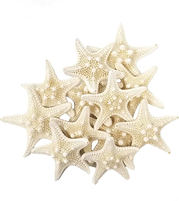 Tumbler Home Certified Knobby White Starfish 1 To 2 Set Of 12 Wedding Seashell Craft Hand Picked And Professionally Packed Home Kitchen
