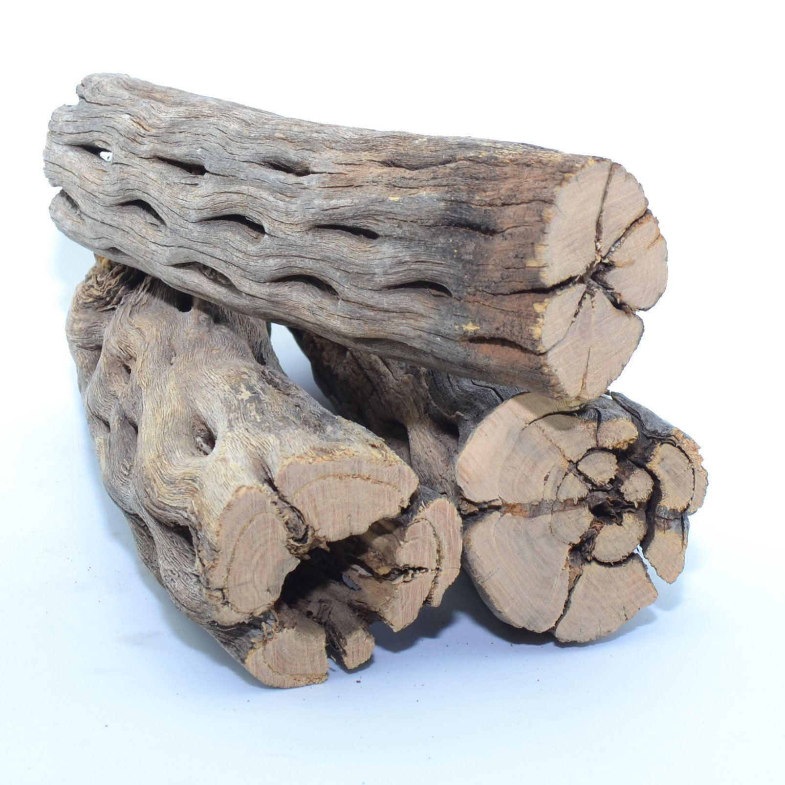 King Sized Natural Cholla Wood XL Large Thick Pieces| 3 Pieces of 5-6'' Long Natural Cholla Wood for Aquarium Decoration, Hermit Crabs, Shrimp by NilocG Aquatics