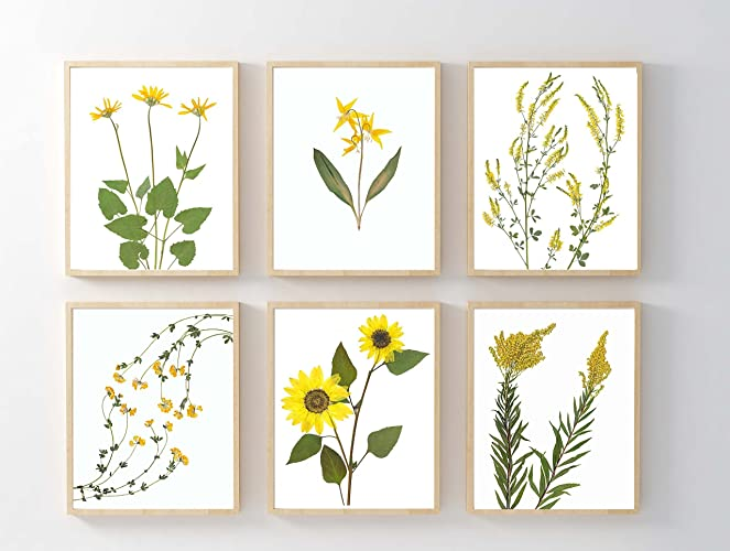 .com: yellow flower print set of 6 pressed flower botanical ...
