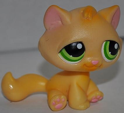 Amazoncom Kitten 110 Orange Green Eyes No White Paint On Paws