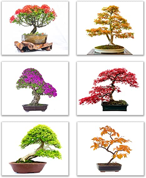 Amazon Com Infinity Creations Inspirational Tree Wall Art Bold Beautiful Bright Bonsai Trees Set Of 6 Art Of Nature Decor Unframed Poster Prints 8 X10 Posters Prints