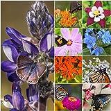 Butterfly Garden Seeds