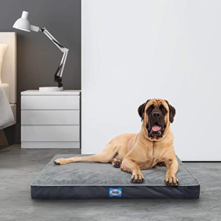 Sealy Ultra Plush Dog Bed – Orthopedic Foam pet Bed with Machine Washable Plush Cover