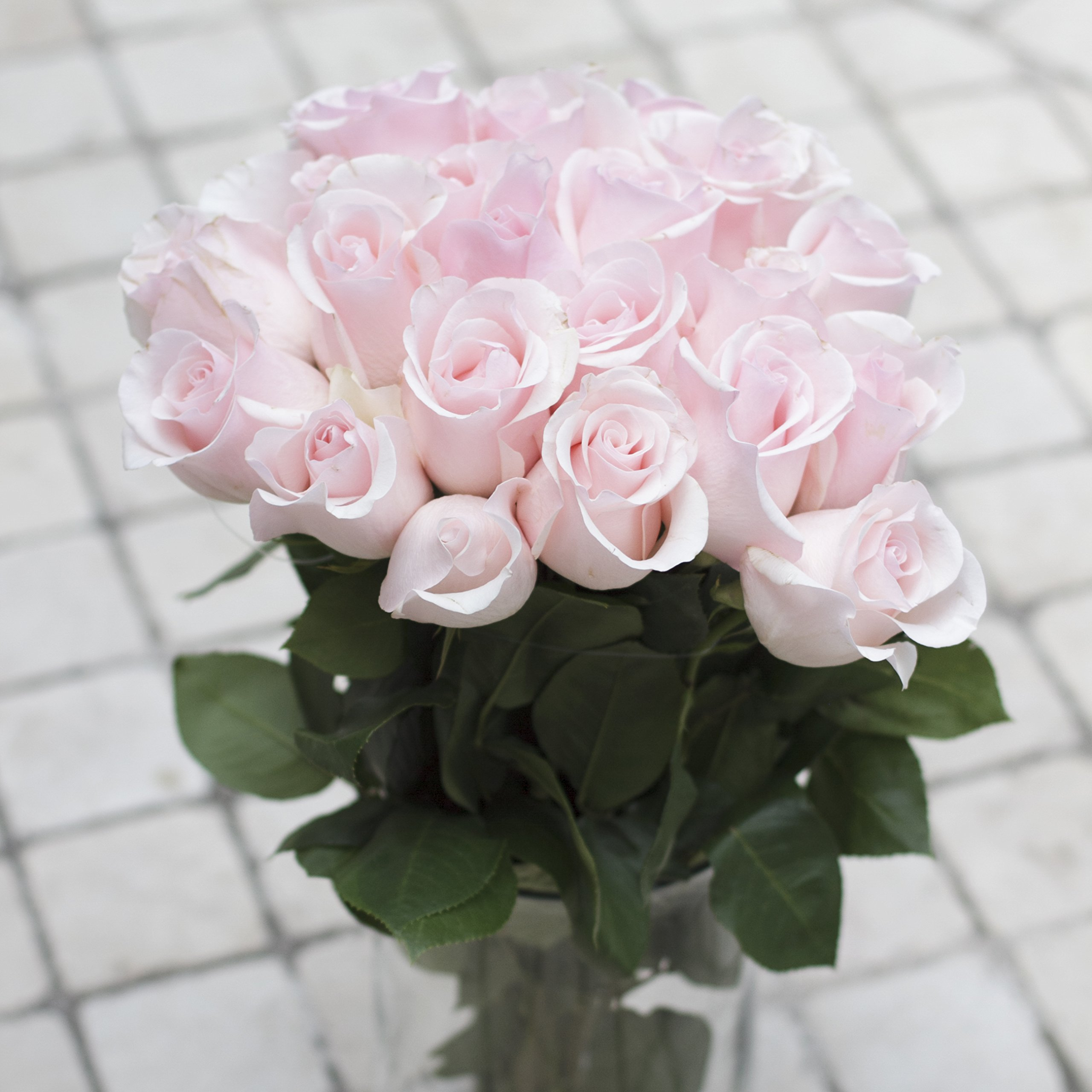 Green Choice Flowers - 24 ( 2 Dozen ) Premium Pink Fresh Roses with 20 inch Long Stem Farm Fresh Flowers Beautiful Light Pink Rose Flower Cut Per Order Direct from Farm Free Fast Delivery Long Lasting by Greenchoiceflowers (Image #3)