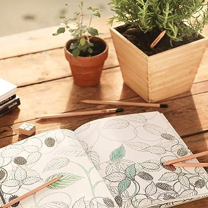 Sprout lápices de colores plantables |Set de 2 de grafito y 6 de ...