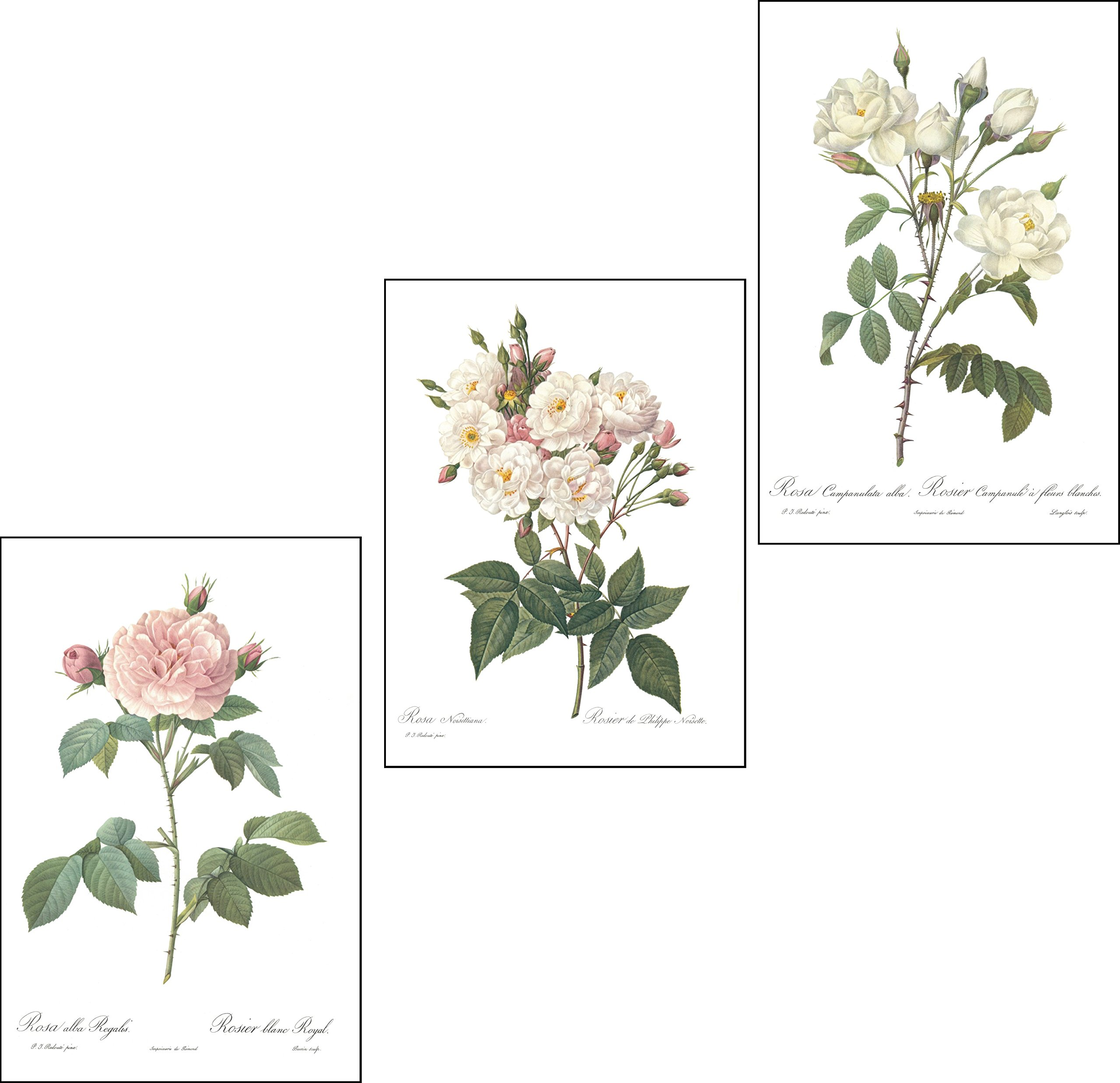 Ink Inc. Set of 3 Botanical Prints, White Home Decor, Redoute Roses, Unframed Wall Art 8x10 inch by Ink Inc.