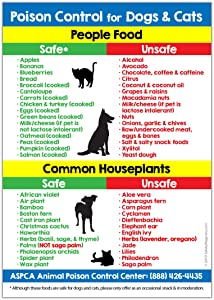 Poison Control for Dogs and Cats Refrigerator Magnet - Food and Plants Toxic to Cats and Dogs Kitchen Magnet - Animal Safety Magnet - 5 inches x 7 inches (1)