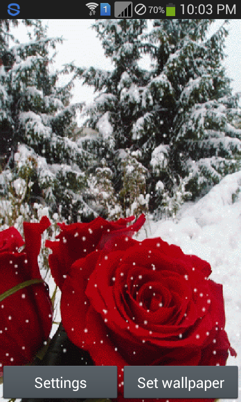 Snow rose live wallpaper appstore for android - Rose in snow wallpaper ...