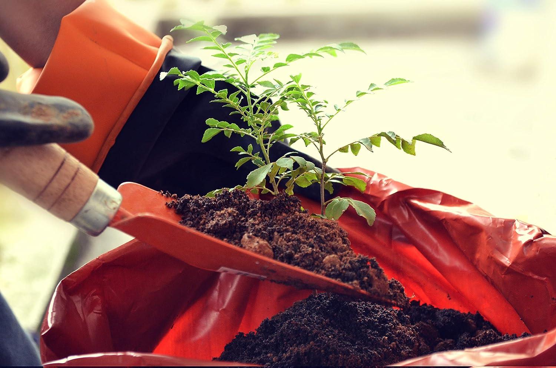 25L Arcilla 2-5 mm Hidropon/ía Arcilla gr/ánulos Redondos /& Gruesos Ideal para macetas Plantas como begruenungen el Tono /& el Techo de la siembra o como Material de construcci/ón