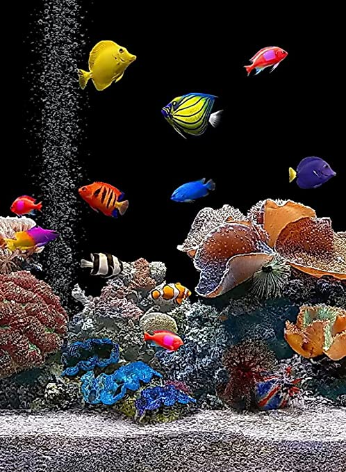 Amazon.com: Rectangle Refrigerator Magnet - Saltwater Aquarium Colorful Fish Tank: Other Products: Kitchen & Dining