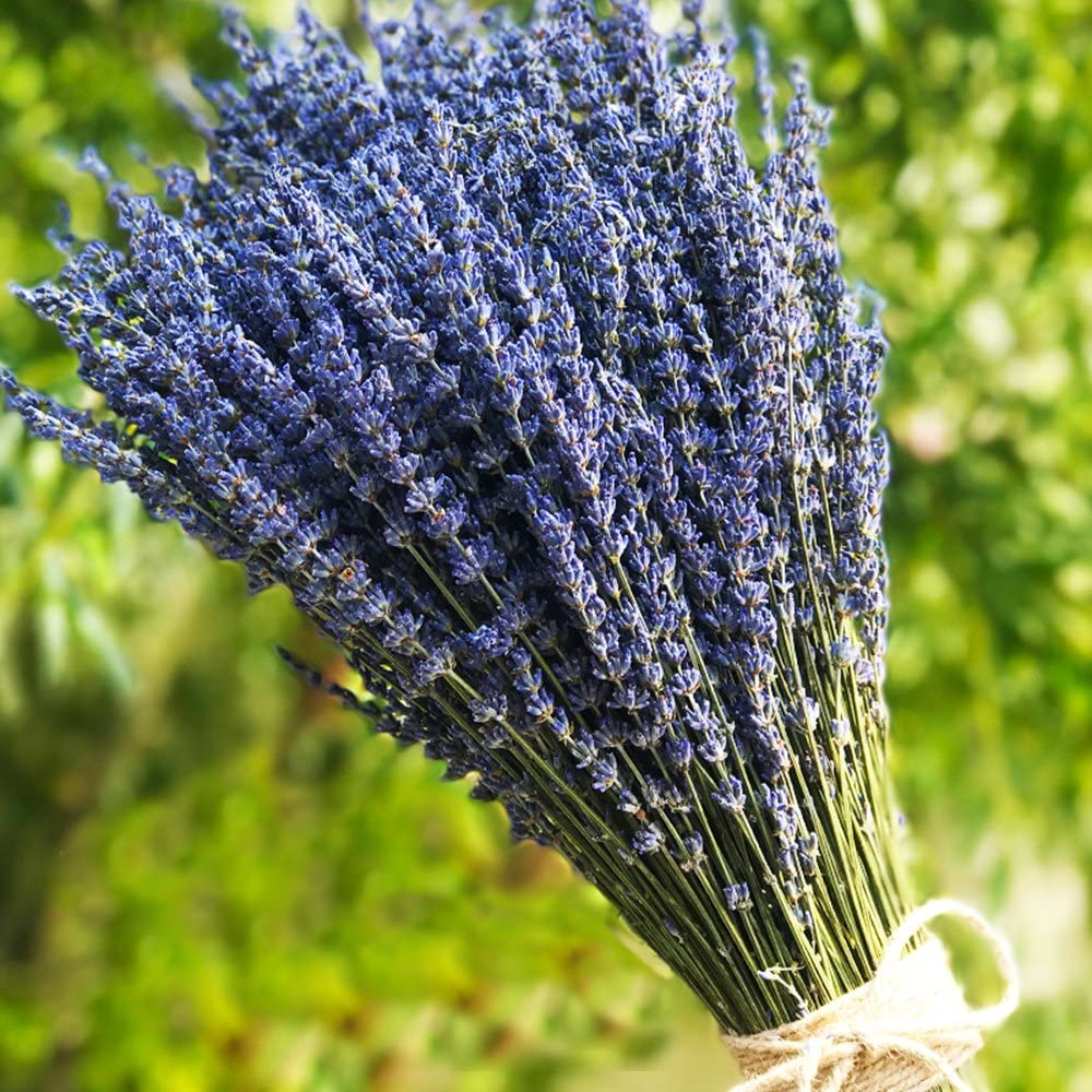 """TooGet Lavender Dried Ultra Blue Bundles(16"""" - 18"""" Long) for Home Decor, Crafts, Gift,Wedding or Any Occasion"""