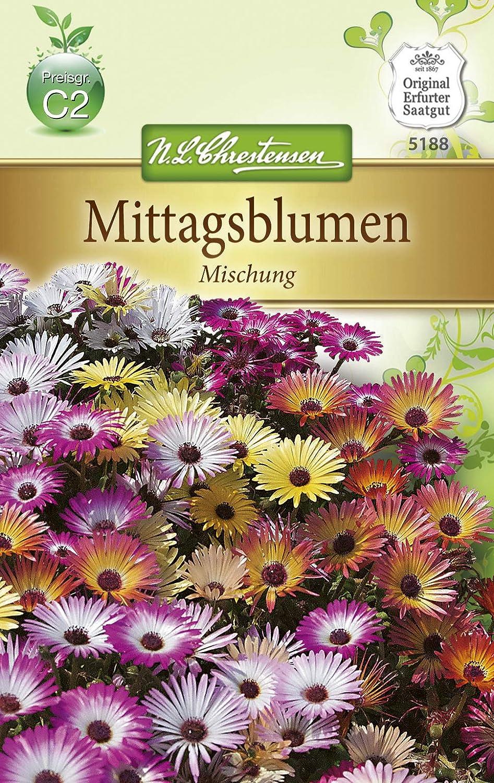 Saatgut Helichrysum Strohblume Mischung Chrestensen AR8882