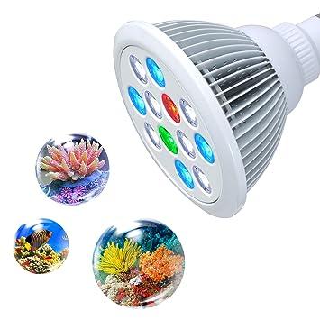 Submersible Ampoule Aquarium E27 Leds Led Et Blanches Lumière Eclairage Led Pour lampe 12 Eau Roleadro Bleues De 12w Avec derCoWxB