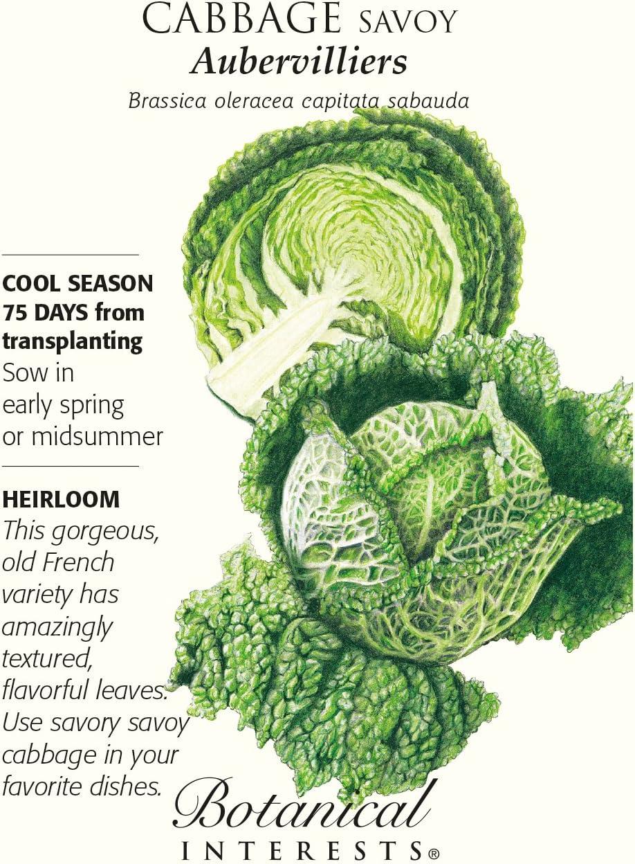 Cabbage seed Leaf Green Ukraine Heirloom Vegetable Seeds 120 SEEDS