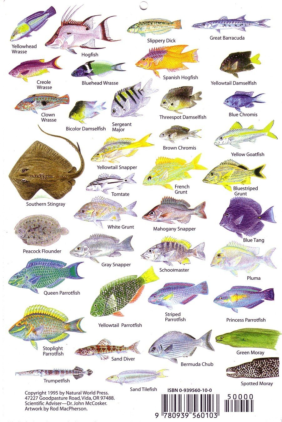 Caribbean fish identification chart all the best fish in for Caribbean reef fish