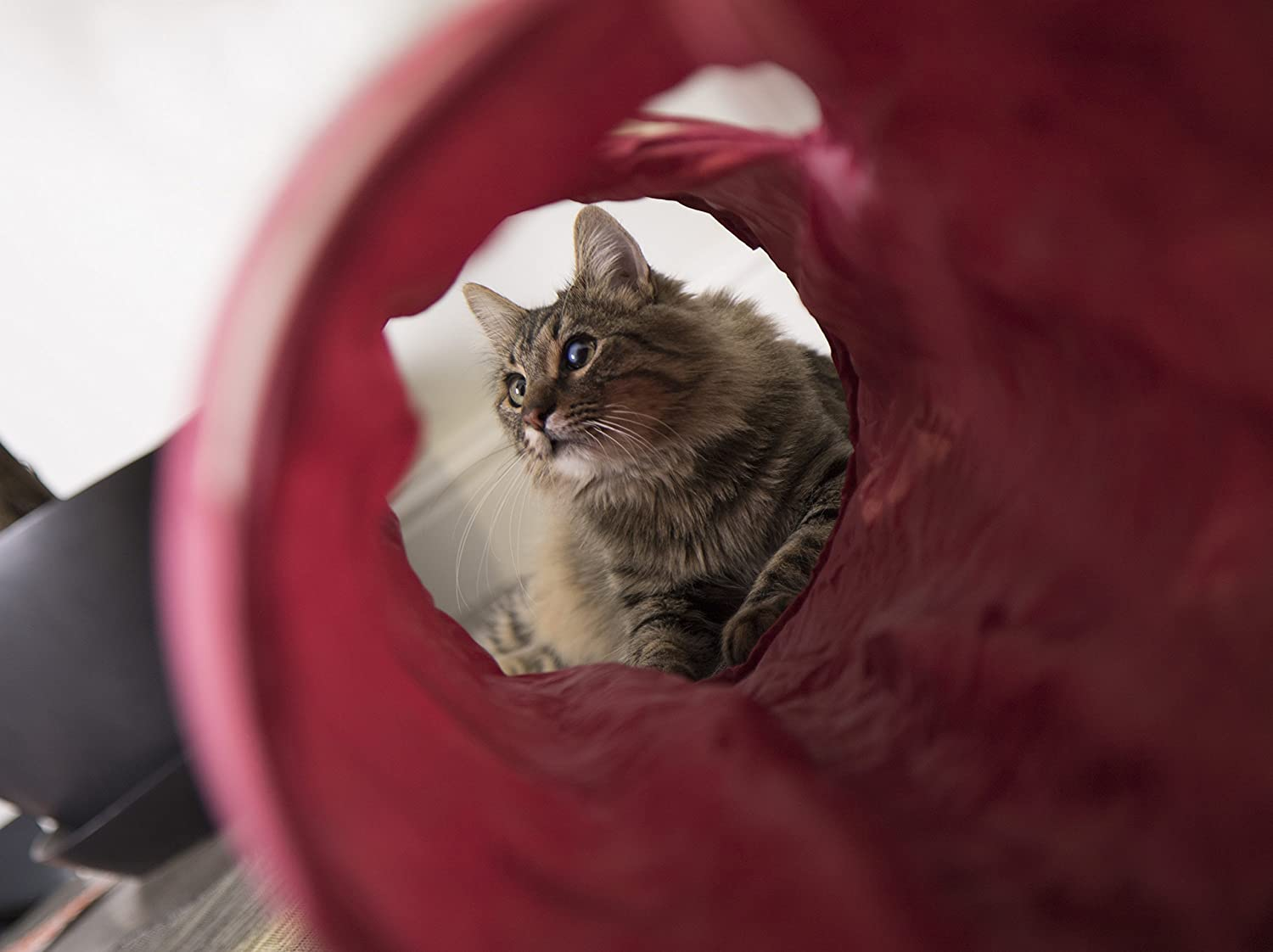 SmartyKat Crackle Chute Cat Toy Collapsible Tunnel: Amazon.es: Productos para mascotas