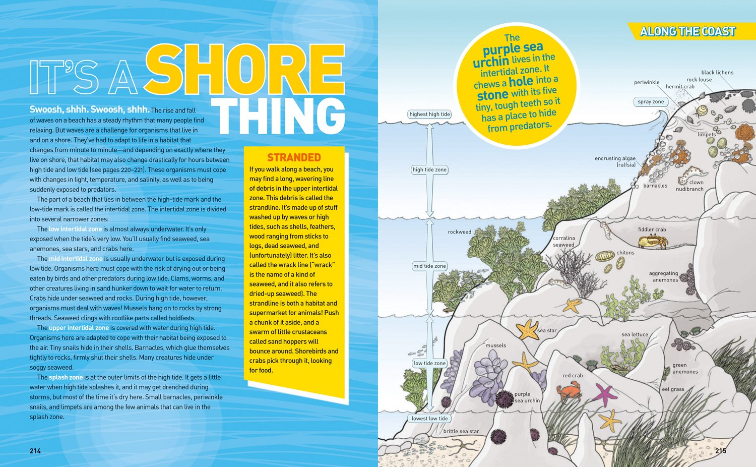 Ultimate Oceanpedia: The Most Complete Ocean Reference Ever (National Geographic Kids) by National Geographic Society (Image #5)