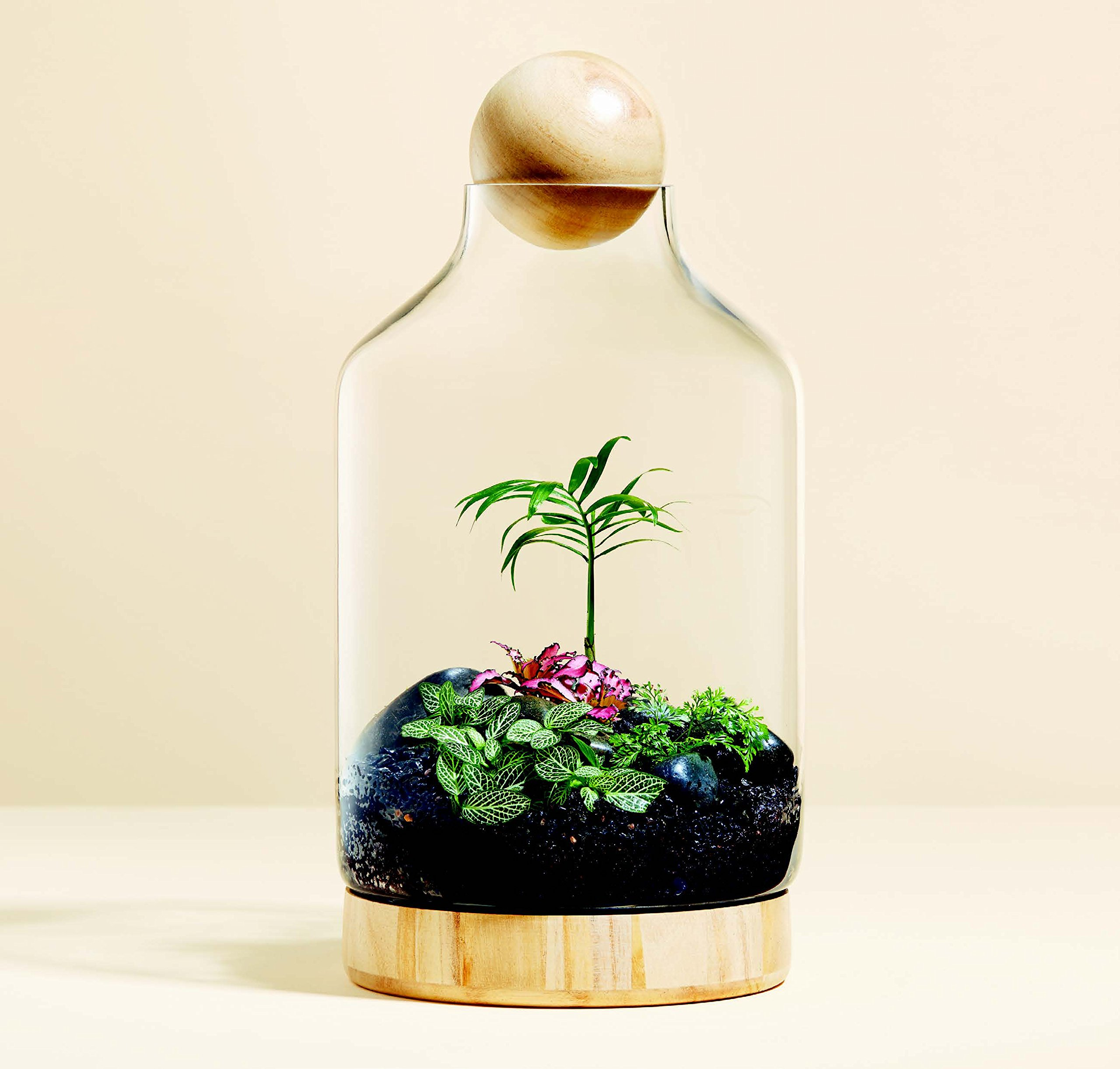 Miniscapes: Create Your Own Terrarium