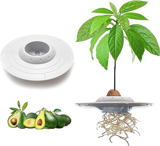 tEEZErshop tazón de plantación de semillas de aguacate, los ...