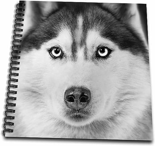 Perros VWPics n gatos – Husky siberiano – Dibujo libro – dibujo ...