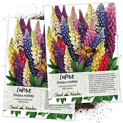 Seed Needs, Lupine Russell Mixture (Lupinus polyphyllus) Twin Pack of 250 Seeds Each : Flowering Plants : Garden & Outdoor