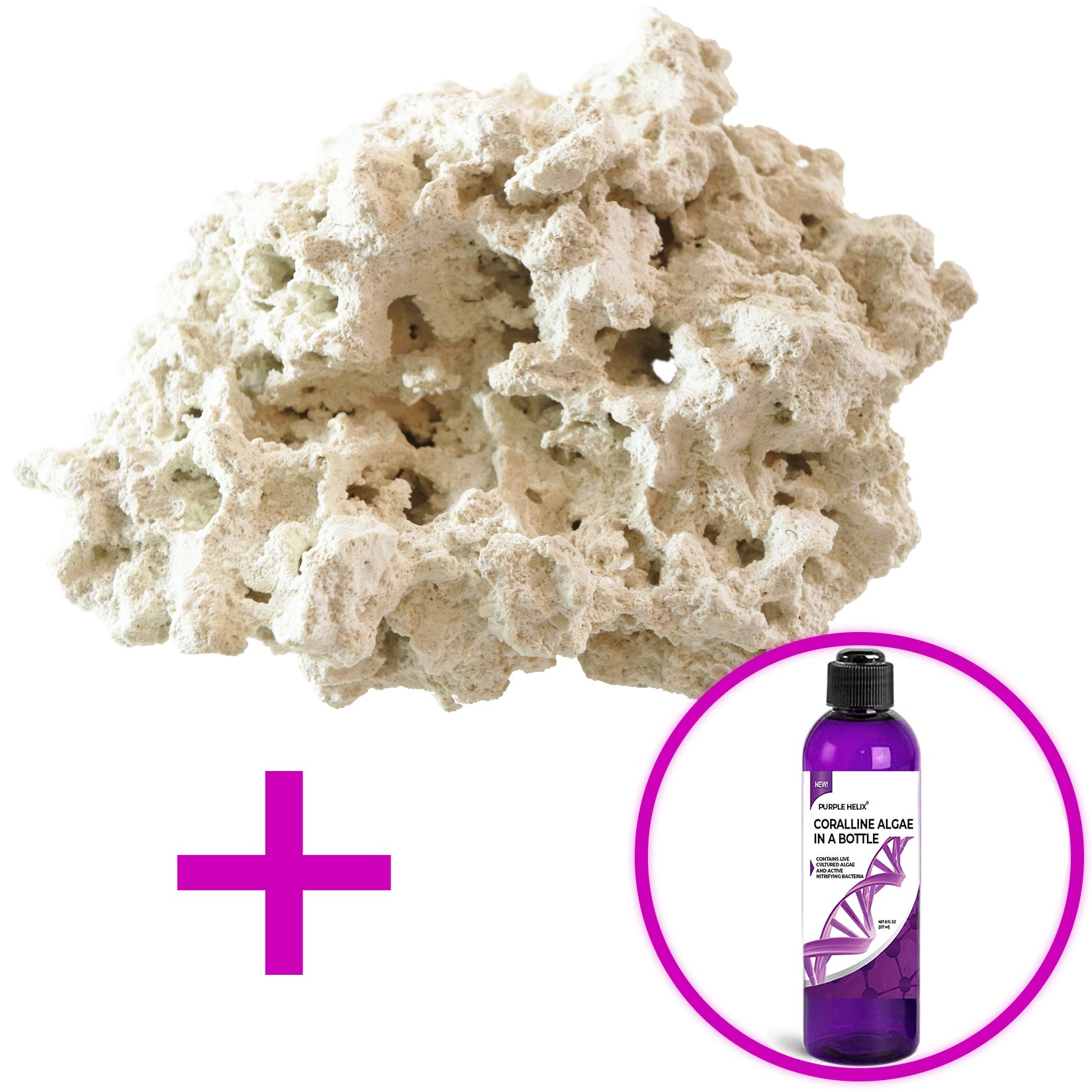 ARC Reef Dry Base Rock with Coralline Algae Spores for Seeding Saltwater Aquariums, 25 lbs. by ARC Reef
