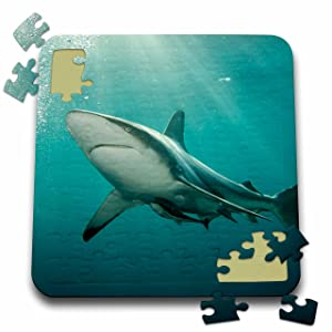 3dRose Danita Delimont - Sharks - Oceanic Black-tip Shark and Remora, Kwazulu-Natal, South Africa - 10x10 Inch Puzzle (pzl_225123_2)