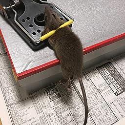 Amazon 鼠捕獲器 ネズミ捕り マウス対策 ねずみ退治 家庭 菜園 台所 無毒無害 設置簡単 強力なバネ 再利用 お徳用 セール 4セット 14 7 5cm 害獣 害虫対策器
