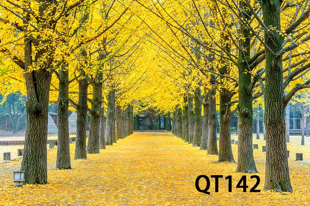 LB Photography Backdrop 7x5ft Vinyl Autumn Scenery Yellow Tree Leaves Decor Customized Outdoor Photo Background Studio Prop Wall Decor QT142