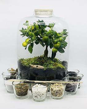 Large Diy Clear Glass Terrarium Kit With Round Concrete Top Garden