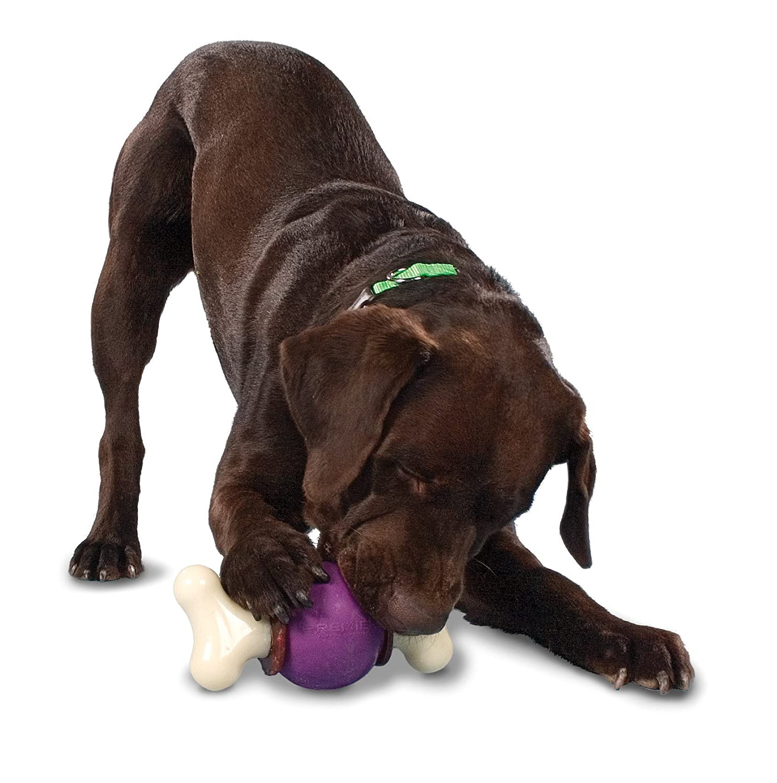 PetSafe Busy Buddy Bouncy Bone Medium Amazon Pet Supplies