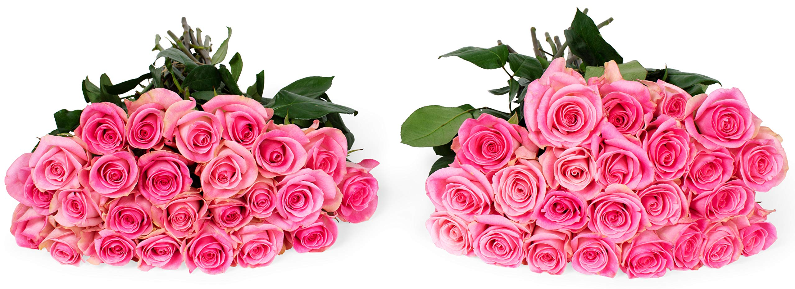 Benchmark Bouquets 50 Light Pink Roses Farm Direct (Fresh Cut Flowers) by Benchmark Bouquets