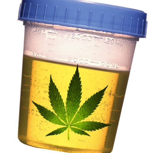 Drug Test Calculator - Marijuana Pass Time Estimator