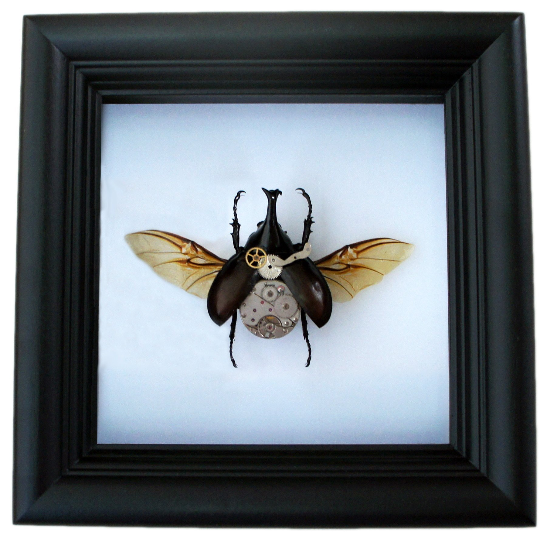 Real Steampunk Rhino Beetle Insect Taxidermy Display Shadow Box 4