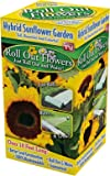Roll Out Flowers Sunflower Garden Seed