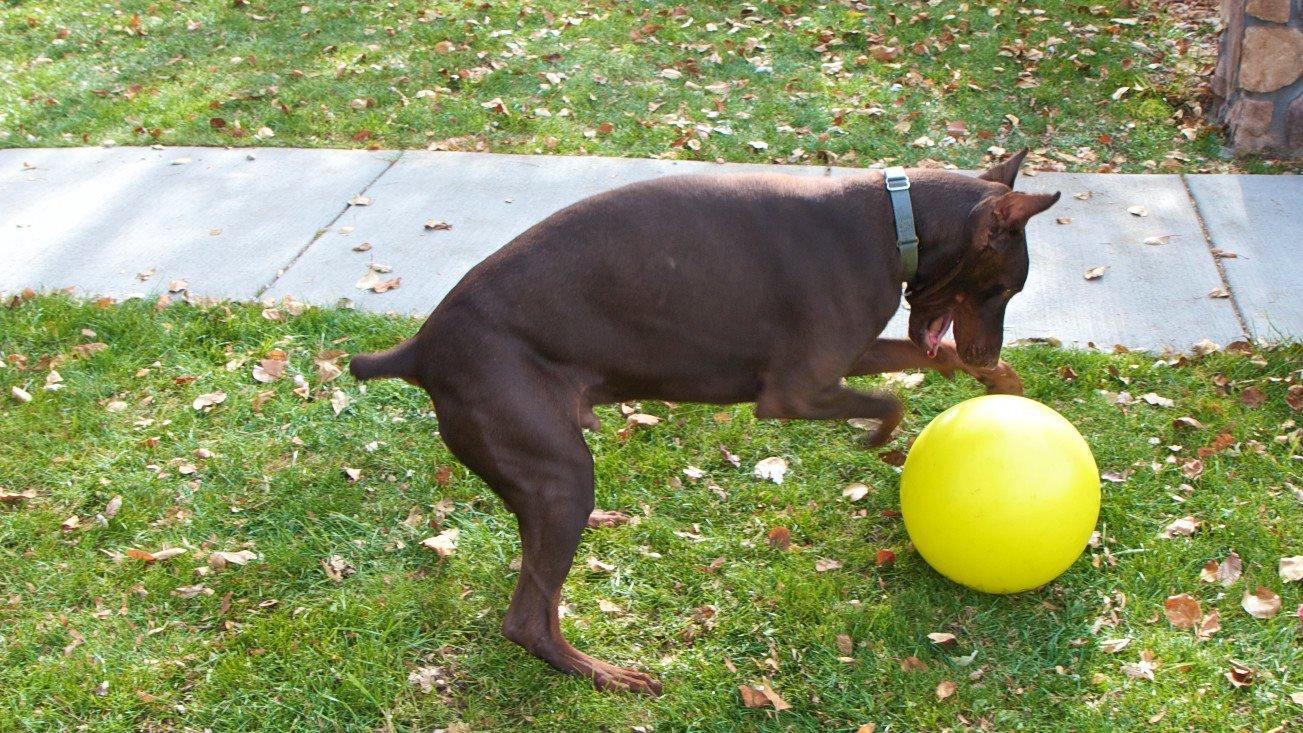 Varsity Pets Tennis Ball Design Dog Toy, Yellow
