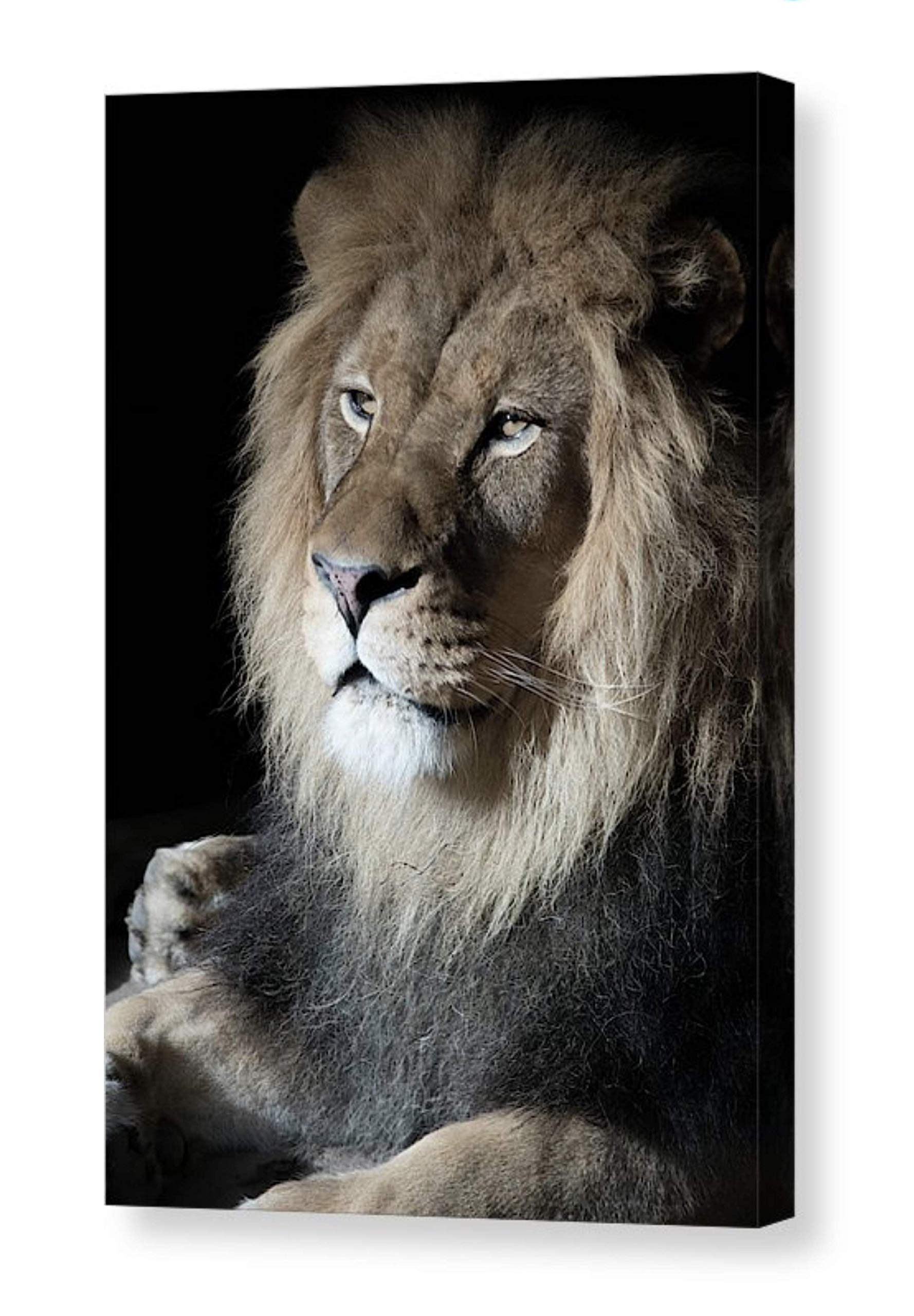 Photographic Portrait of Male African Lion Printed on CANVAS Ready to Hang Nature Photo Tawny Brown Tan Black Wall Art for Home or Office Big Cat Photography 8x12 12x18 16x24 20x30