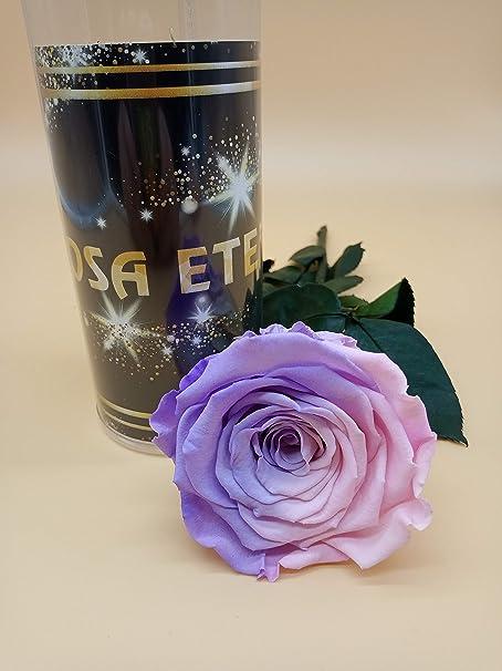 Rosa eterna preservada arcoíris Pastel Malva Extra. Gratis TU ENVÍO. Rosa preservada eterna Multicolor Extra. Tubo de conservación de 25 cm. Hecho en España.: Amazon.es: Hogar