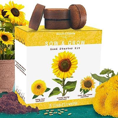 Nature's Blossom Sunflower Growing Kit - Grow 3 Different Sunflowers from Seed. A Complete Beginner Gardeners Growing Set to Start Your Own Indoor Flower Garden. : Garden & Outdoor